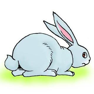 兔子的尾巴_ ~~《bee》~~