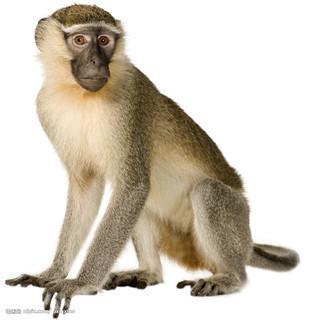 说动物之猴子_happy