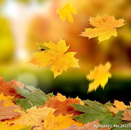 秋天悲伤风景图片