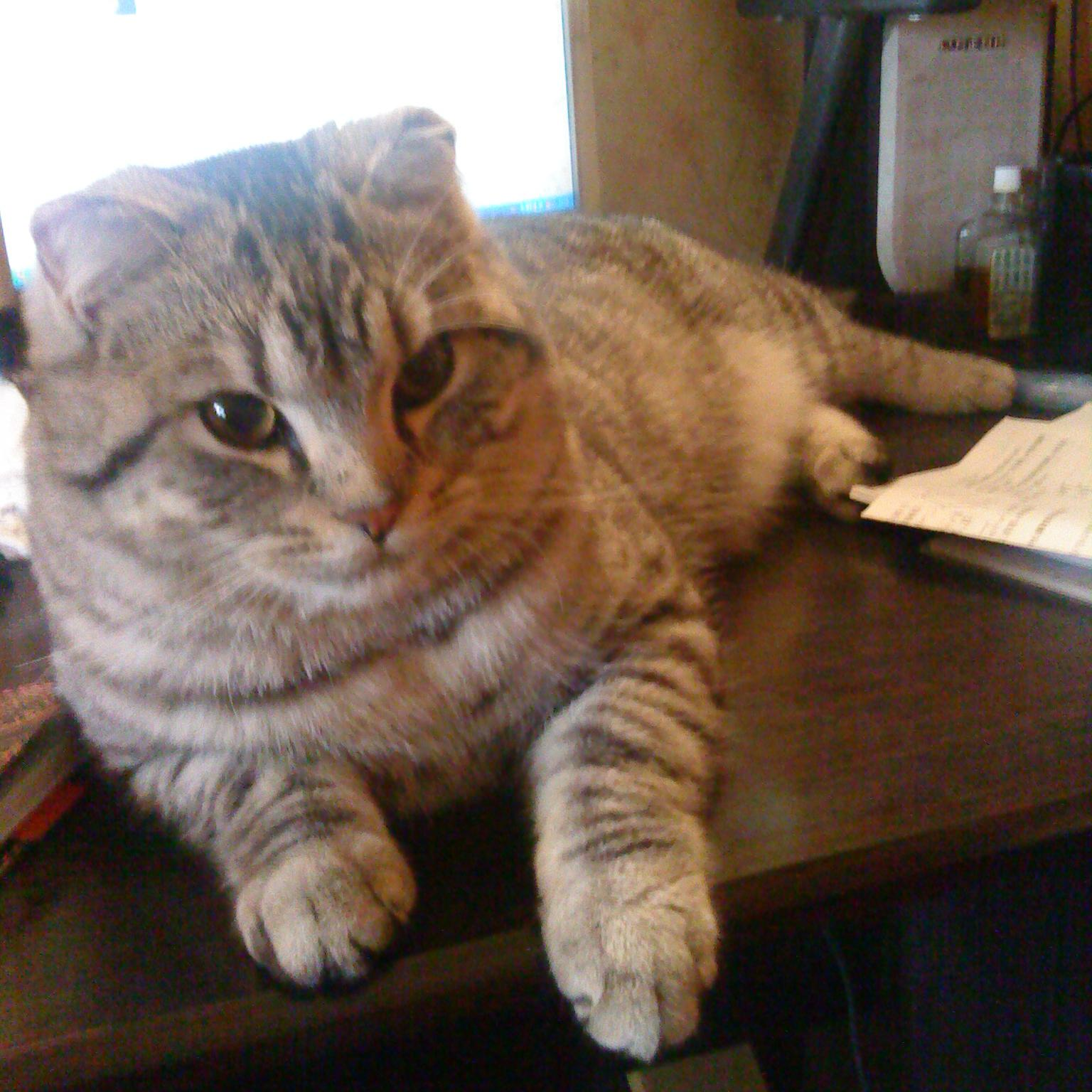 绝地求生猫9陈可爱
