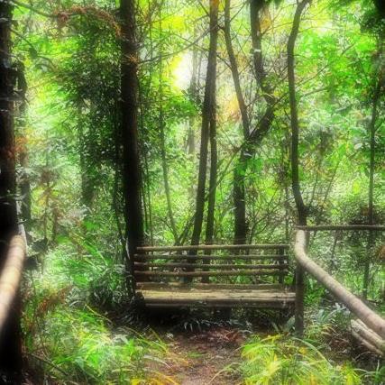 壁纸 风景 森林 桌面 427_427