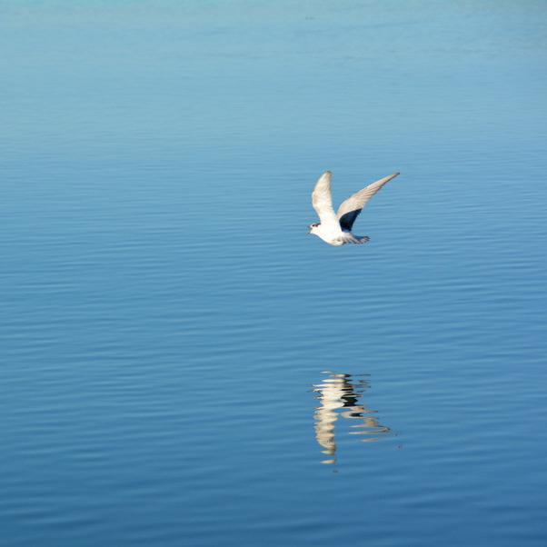 飞翔的翅膀-会欣