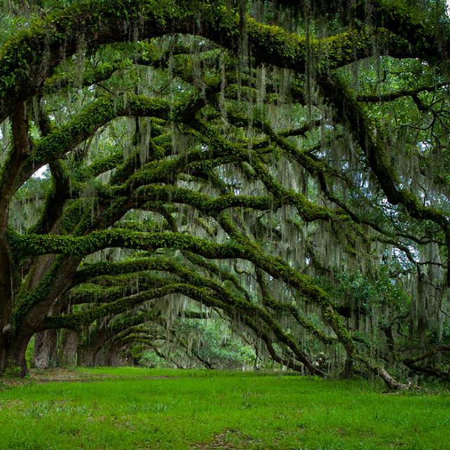 """作者通过木棉树对橡树的""""告白"""",来否定世俗的,不平等的爱情观,呼唤"""