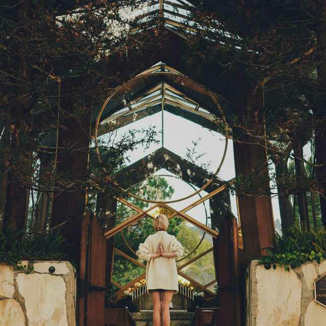 [致橡树]-舒婷