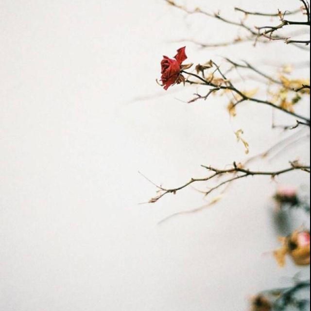 桃花纷飞 手绘