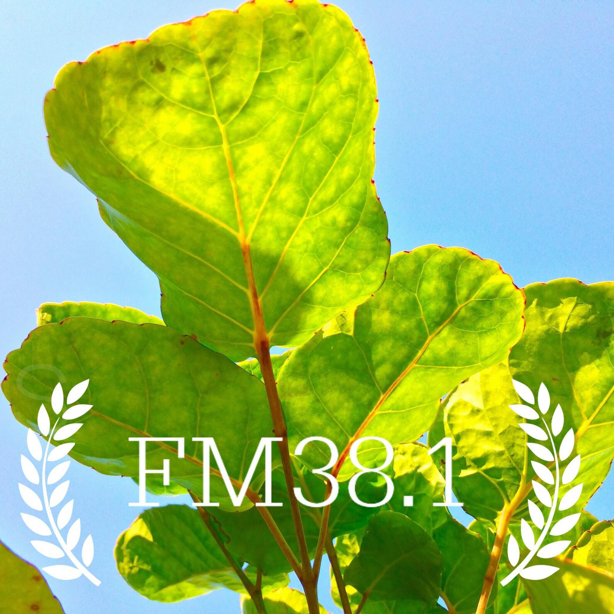 <![CDATA[FM38.1]]>