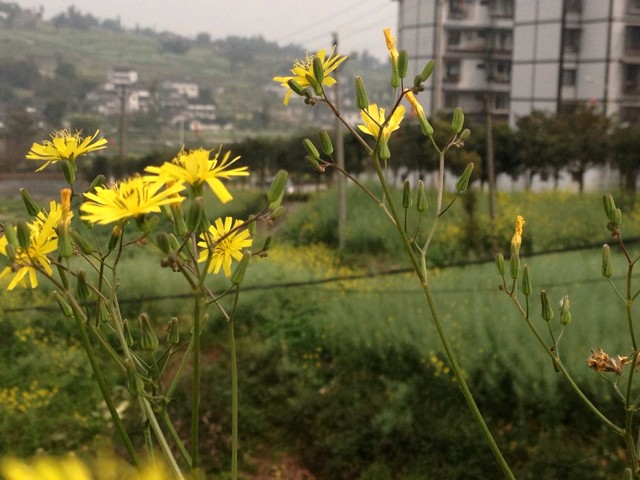 泸州风景区哪有花