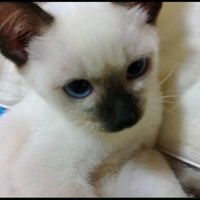 一只可爱小猫配字老公