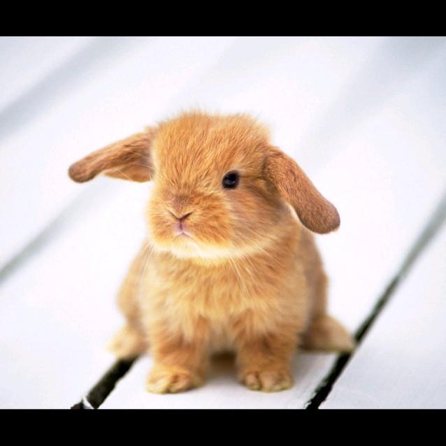 兔舌头_荔枝fm
