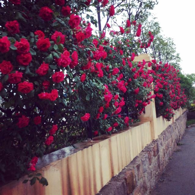 fm465415遇见你是最美的风景