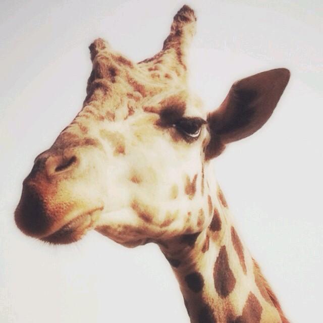 说话最慢的动物图片
