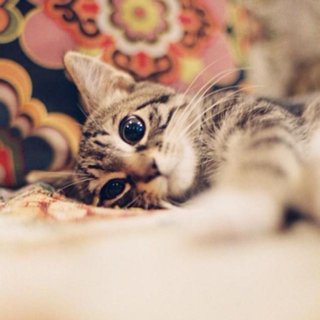 可爱猫咪再见图片